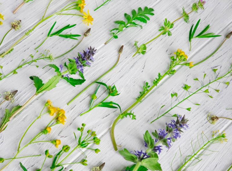 Fond des wildflowers Fond pour une banni?re avec des couleurs naturelles Banni?re avec des fleurs de Copyspeis Fond floral Fleurs images stock