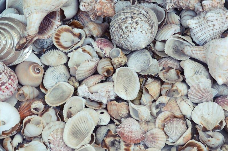 Fond du placer petit et des coquilles moyennes de mer, couvrant également la surface images stock