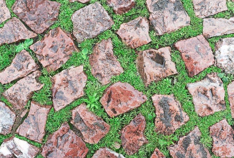 Fond du vieux trottoir rouge de pavé rond humide après la pluie avec l'herbe vert clair dans les coutures photos libres de droits