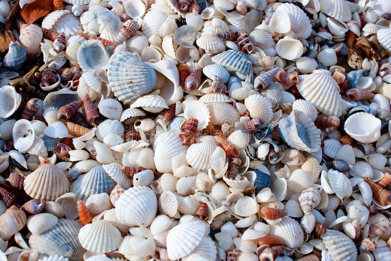 Fond effectué d'une pile des Seashells photos stock