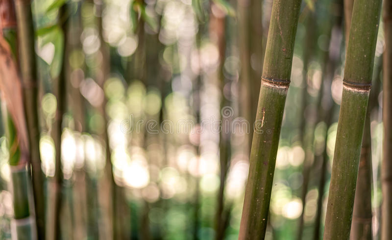 Fond en bambou de forêt photographie stock libre de droits