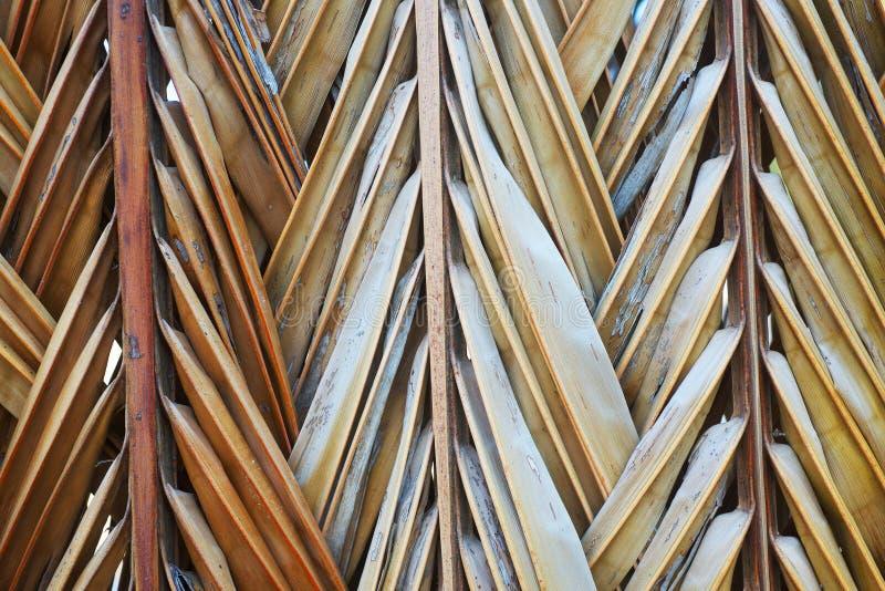 fond en bambou sec de jaune de feuille photo stock image du lignes plantation 49643118. Black Bedroom Furniture Sets. Home Design Ideas