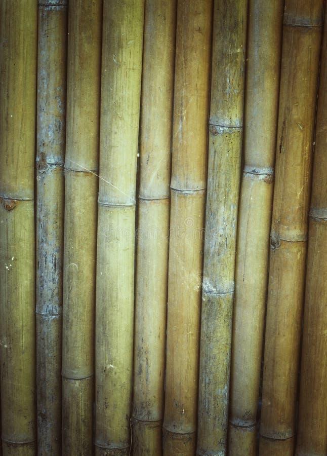 Fond en bambou sec de texture images libres de droits