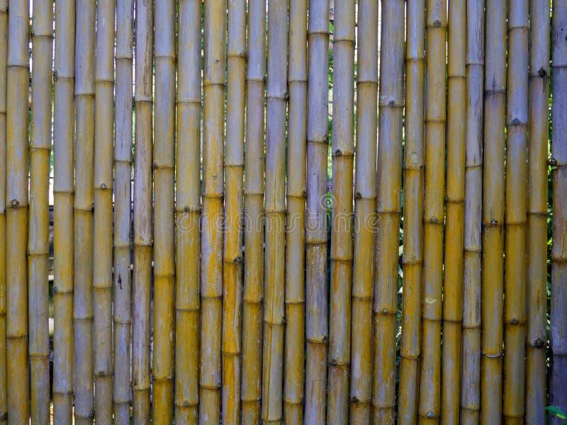 Fond en bambou sec de texture de barrière image stock