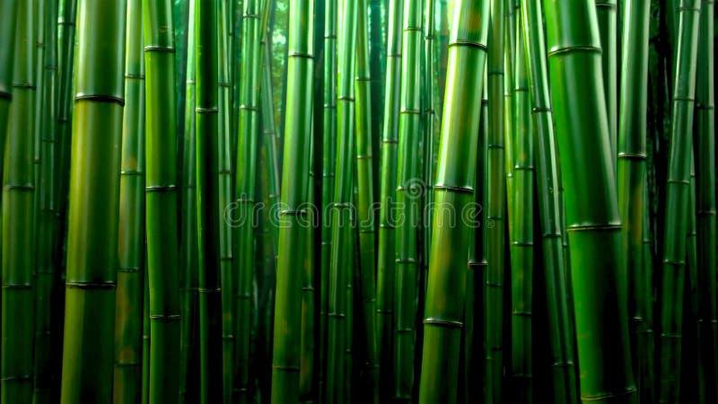 Fond en bambou vert de texture de forêt, panorama en bambou de texture photo stock
