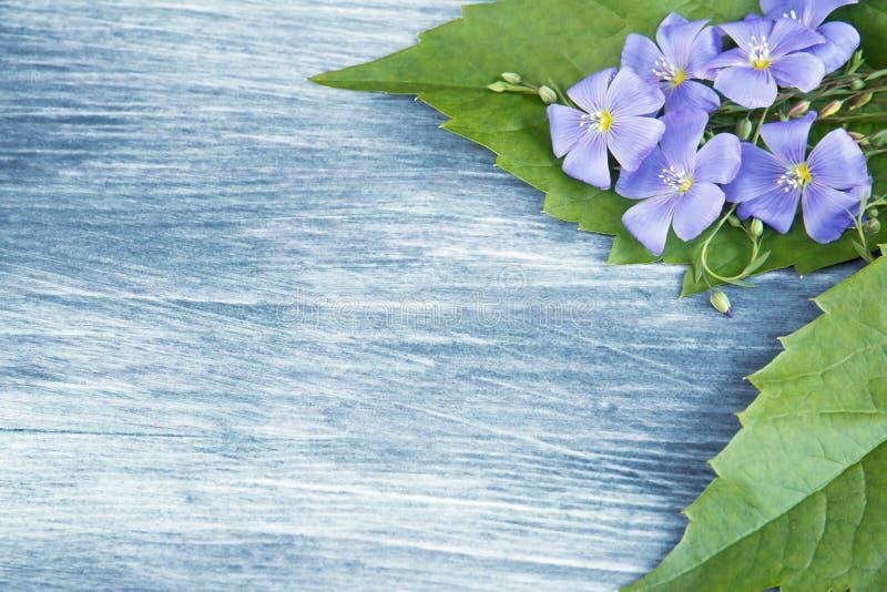 Fond en bois avec les fleurs bleues images libres de droits