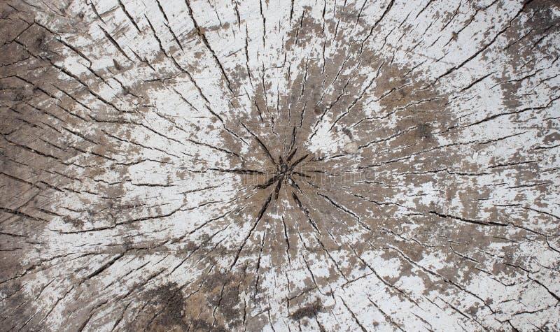 Fond en bois blanc avec la vieille peinture, fissures, usures L'espace sous le texte Vieux tronçon dans le lait de chaux images libres de droits