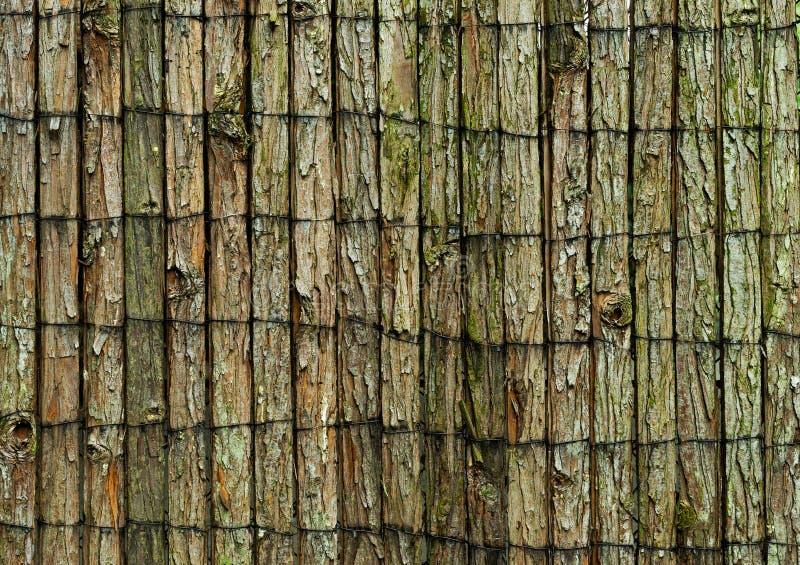 Fond en bois couvert dans l'écorce d'arbre images libres de droits