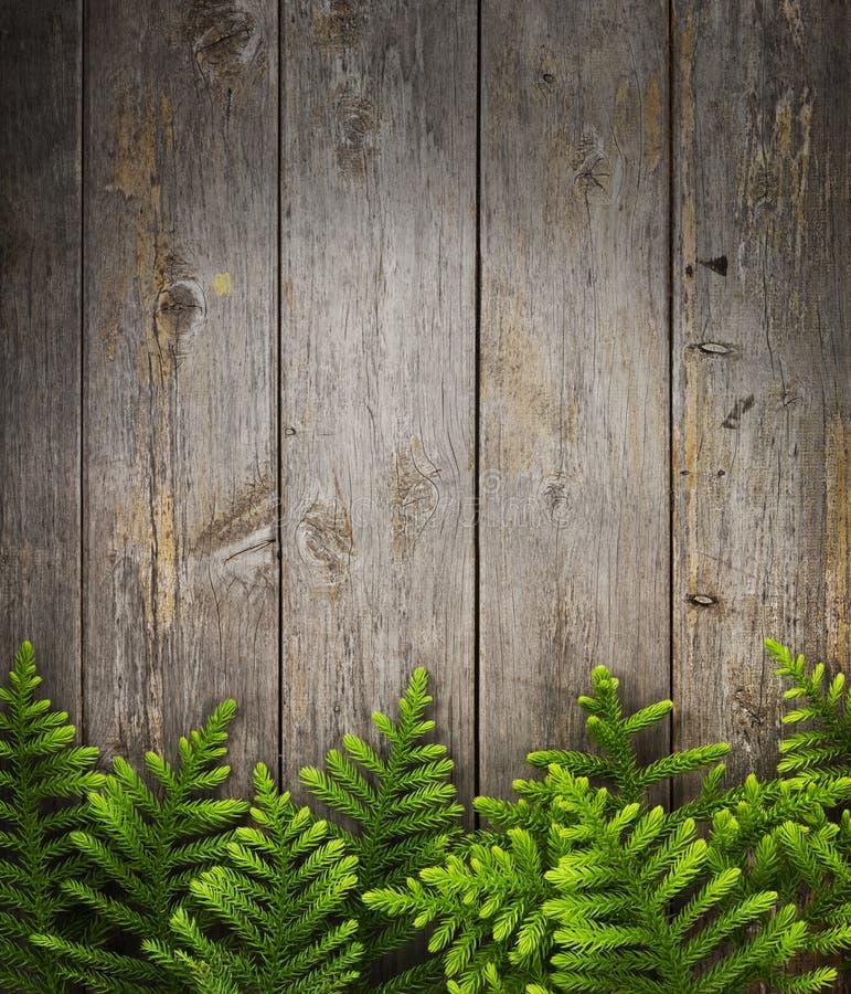 Fond en bois d'arbre de pin photos stock