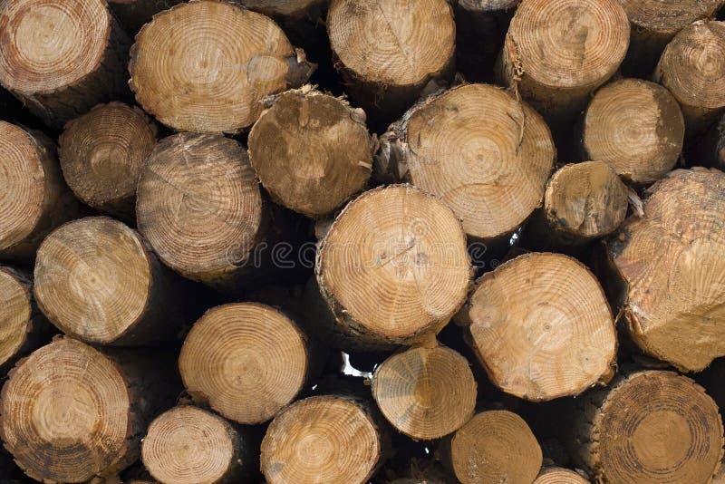 Fond en bois de pile de rondin pour l'industrie de bois de charpente photographie stock libre de droits