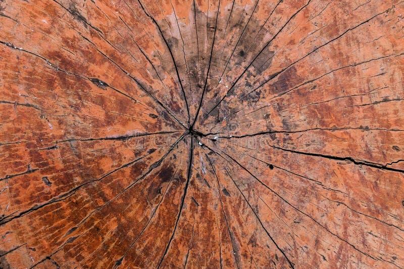 Fond en bois de texture d'anneaux d'arbre vieux, anneau annuel en coupe photographie stock libre de droits