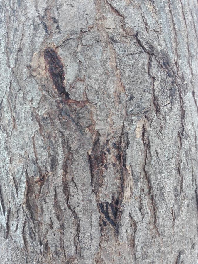 Fond en bois de texture de Brown photos libres de droits