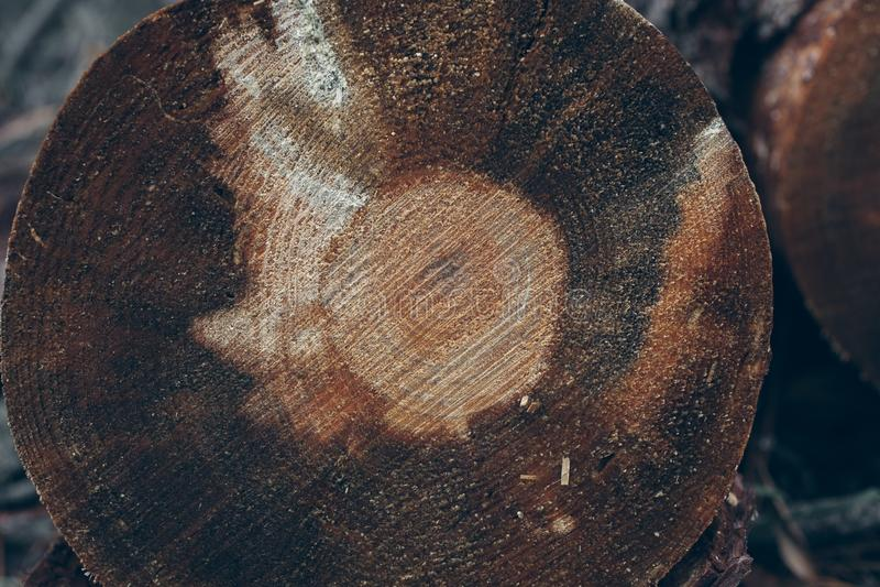 Fond en bois de troncs Section transversale de joncteur réseau d'arbre Texture et fond en bois pour des concepteurs Vue de plan r image libre de droits