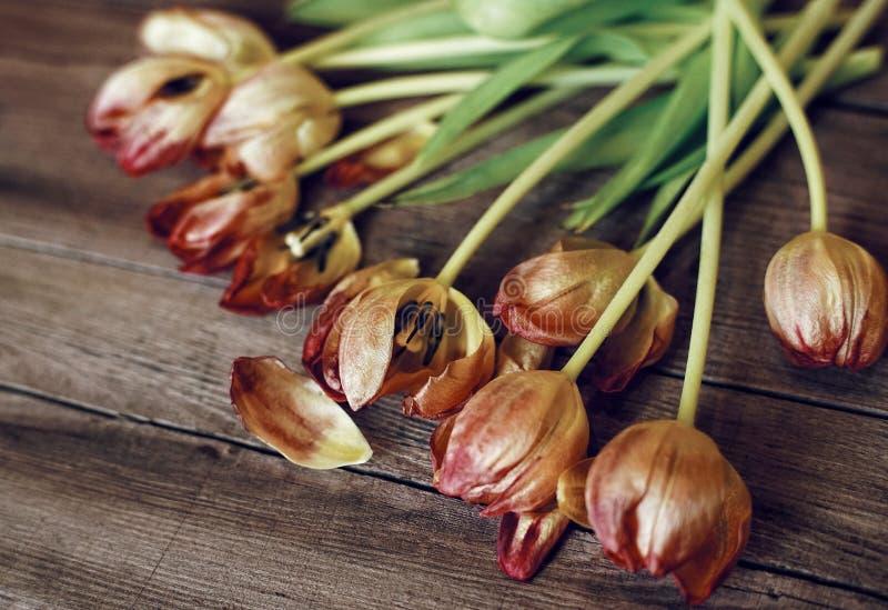 fond en bois en gros plan de tulipes de bouquet rouge de fleurs photographie stock libre de droits