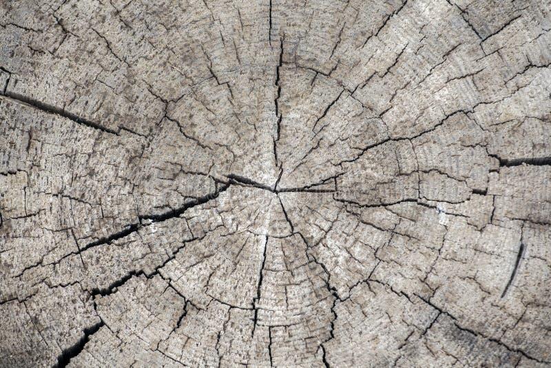Fond en bois pointu naturel de souche images libres de droits