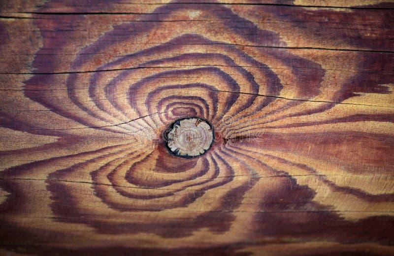 Fond en bois pointu naturel de souche image libre de droits