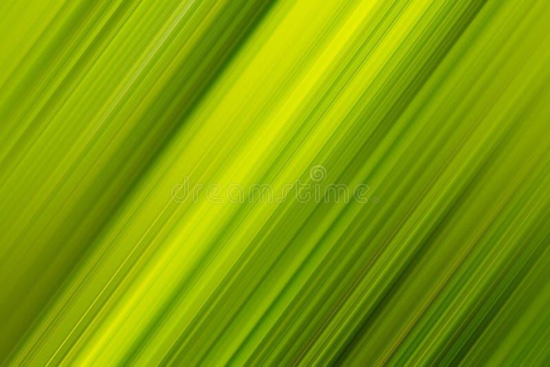 Fond en feuille de palmier diagonal photo libre de droits