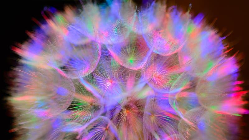 Fond en pastel coloré - fleur abstraite vive de pissenlit image libre de droits
