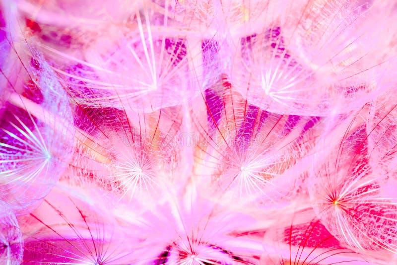 Fond en pastel coloré - fleur abstraite vive de pissenlit image stock
