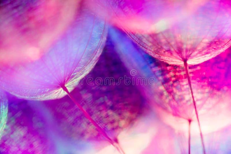 Fond en pastel coloré - fleur abstraite vive de pissenlit photo stock