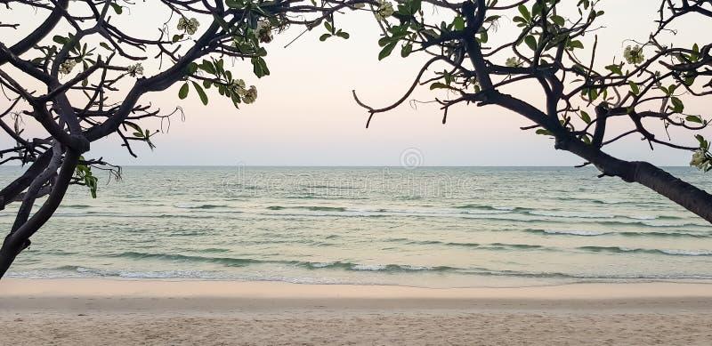 Fond en pastel de seaview de coucher du soleil de soirée, vague molle et plage sablonneuse blanche par le beau Plumeria ou le Fra image stock