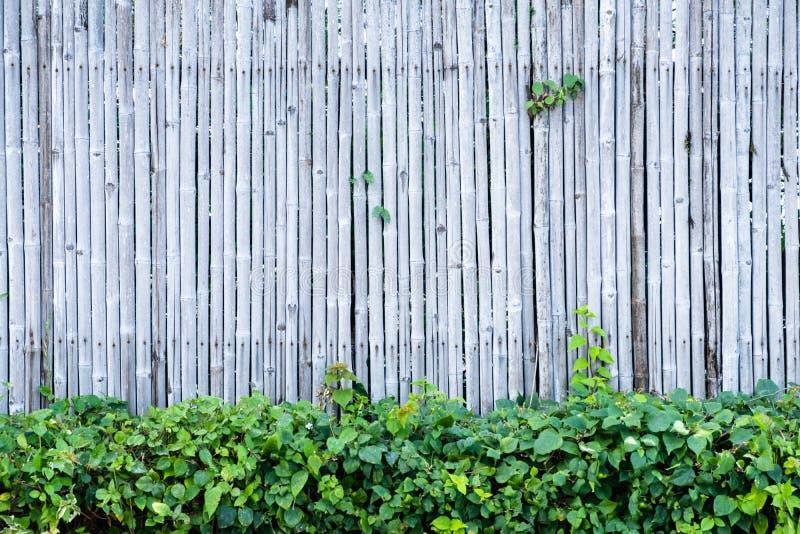 Fond et texture en bambou de mur de barrière avec la décoration de plante verte photos libres de droits