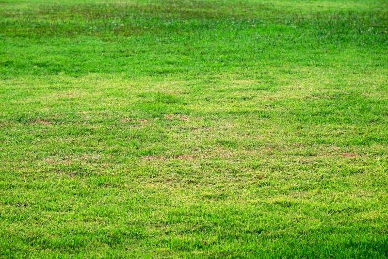 Fond extérieur naturel de texture de pelouse d'herbe, images libres de droits