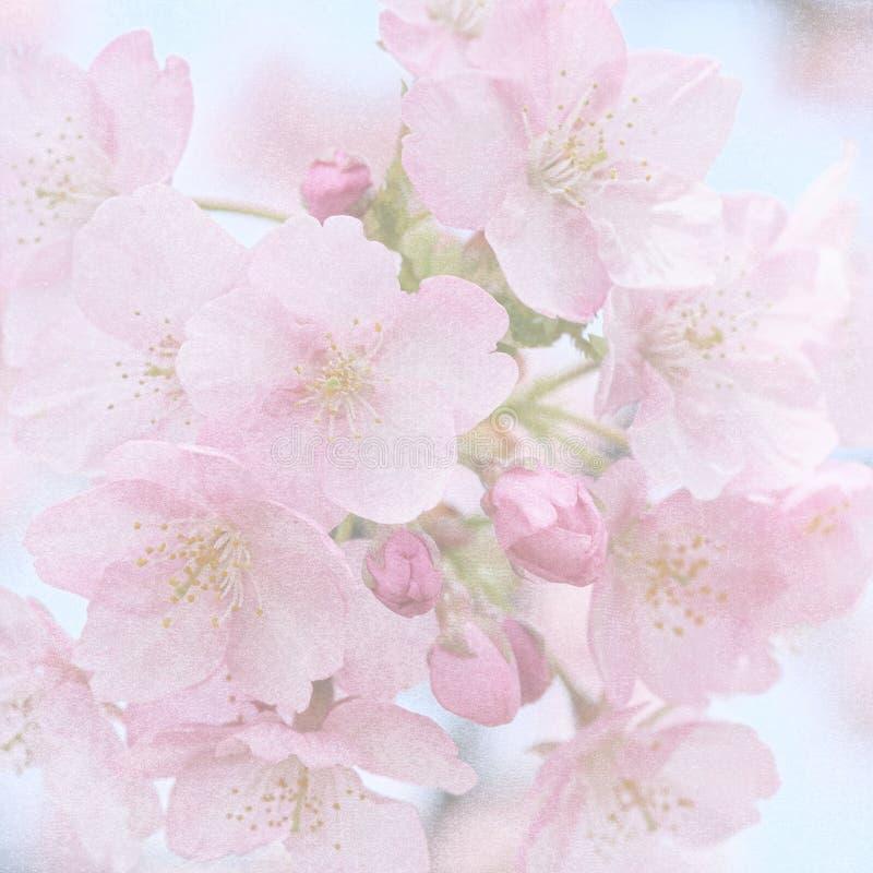 Fond fané sale de fleur illustration stock
