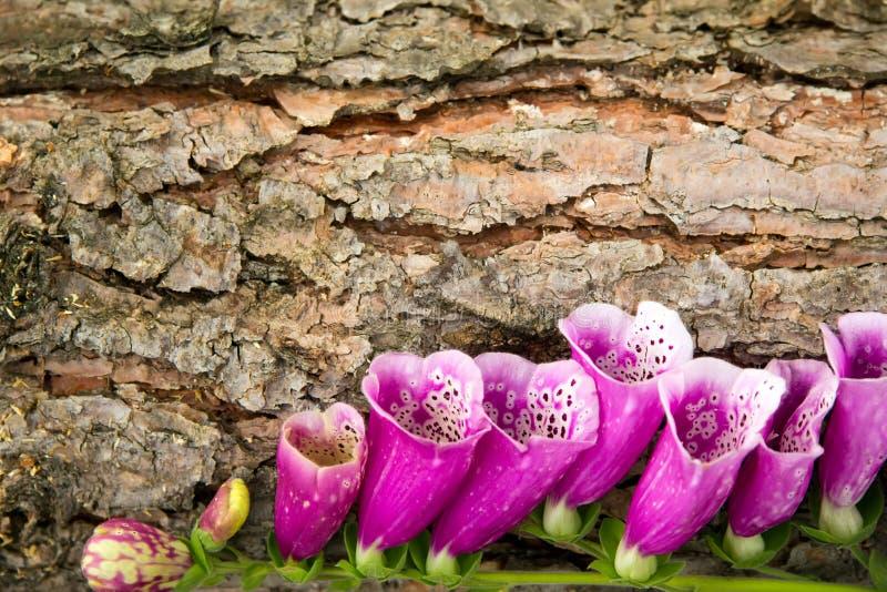 Fond - fleurs et écorce pourpres image libre de droits