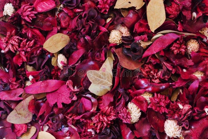 Fond : Fleurs sèches image stock