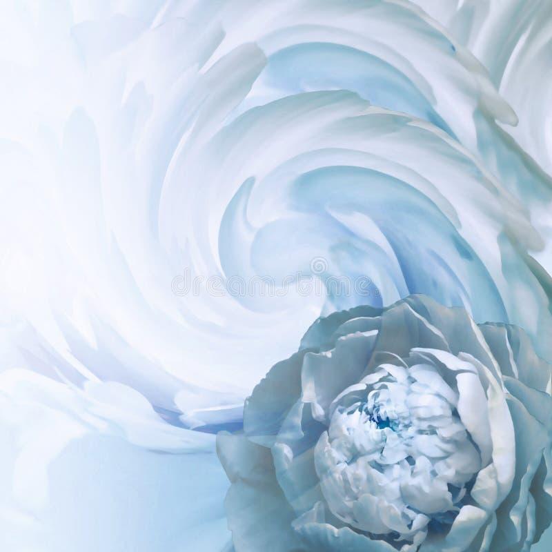 Fond floral abstrait de bleu-turquoise Une fleur d'une pivoine bleu-clair sur un fond des pétales tordus Carte de voeux image libre de droits
