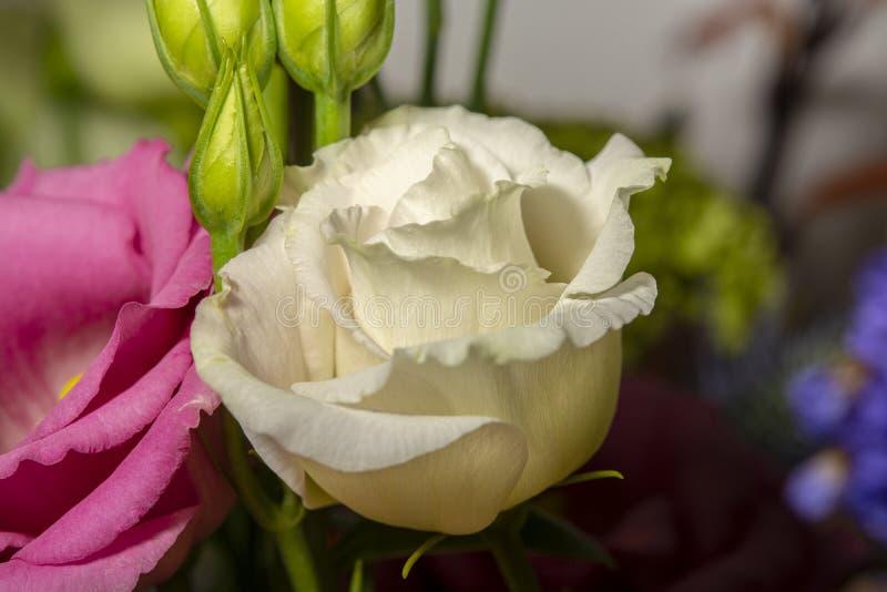 Fond floral avec les fleurs fra?ches de colofrul dans le bouquet, macro fin de photo  photographie stock libre de droits
