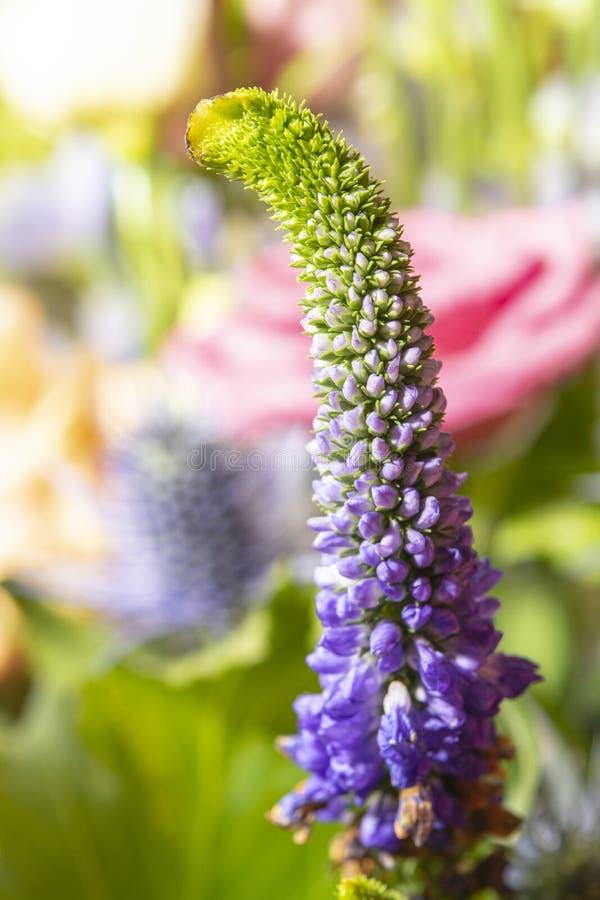 Fond floral avec les fleurs fra?ches de colofrul dans le bouquet, macro fin de photo  photographie stock