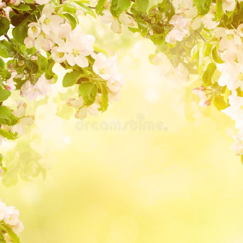 Fond floral d'Apple photographie stock libre de droits