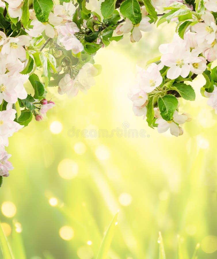 Fond floral d'Apple photo libre de droits