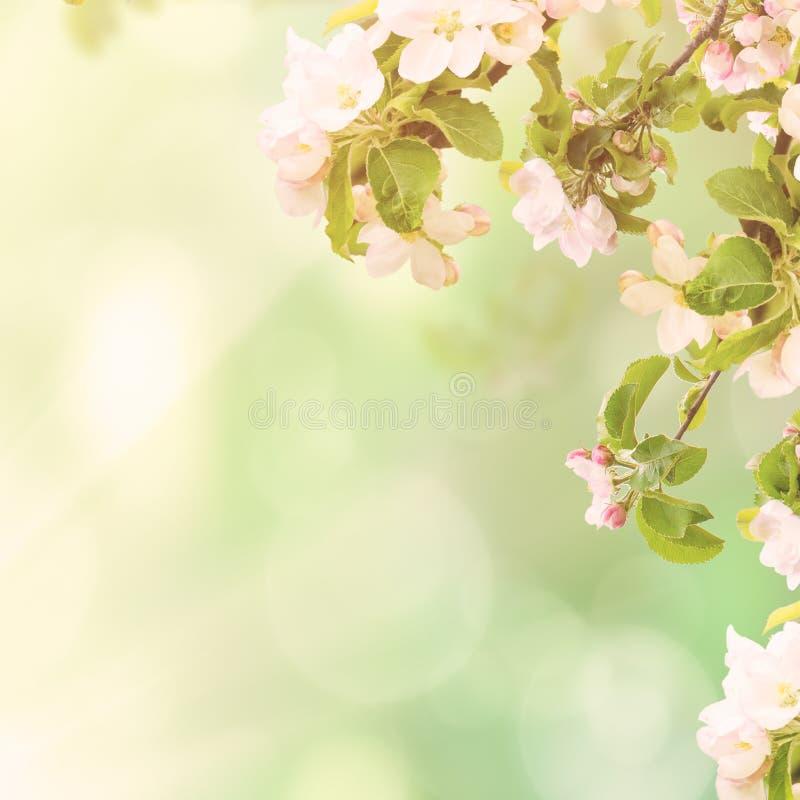 Fond floral d'Apple image stock