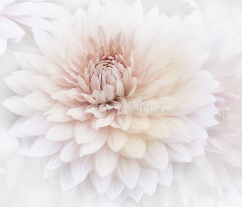 Fond floral d'aquarelle images stock