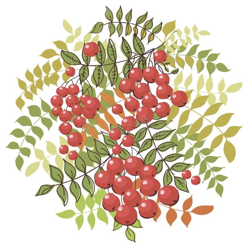 Fond floral d'automne coloré avec la sorbe illustration libre de droits