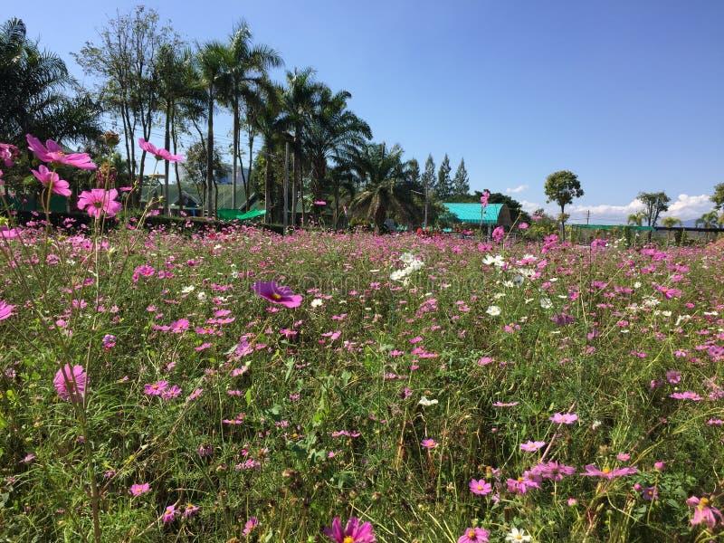 Fond floral de la fleur Garden image stock