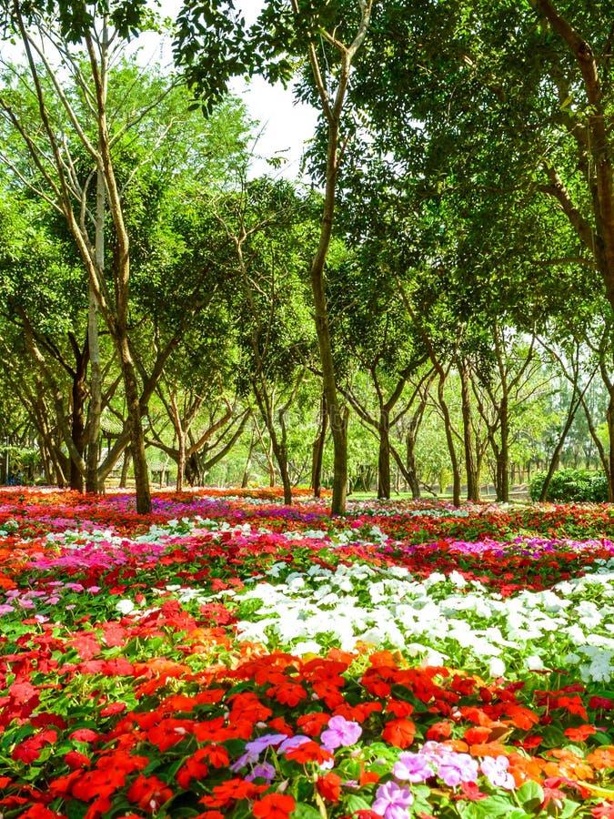 Fond floral de la fleur Garden photo stock