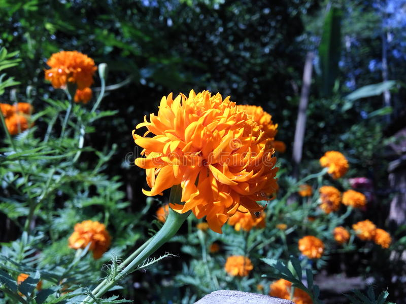 Fond floral de la fleur Garden photos libres de droits