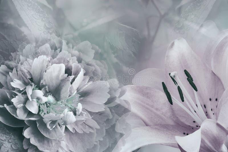 Fond floral de lis et de pivoine Fleurit le plan rapproché sur une lumière - rose - fond de turquoise Composition de fleur photo libre de droits