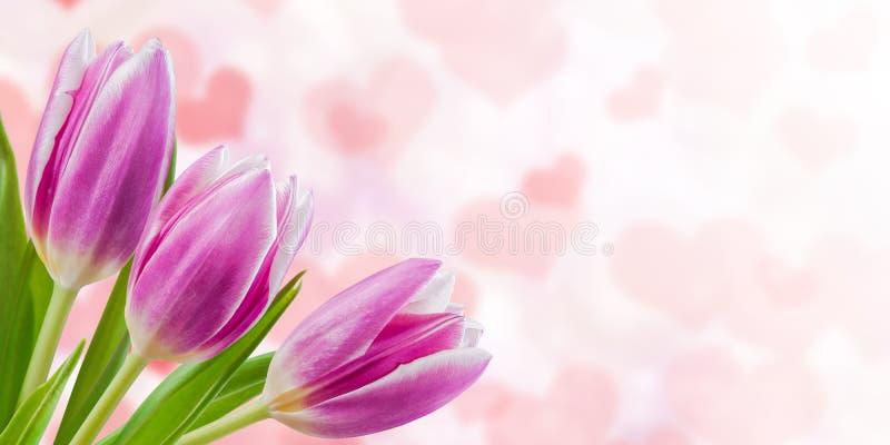 Fond floral de nature de vacances photo stock
