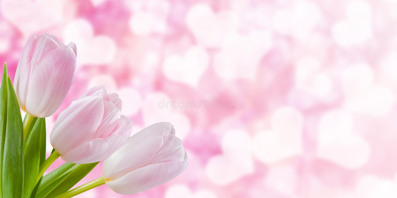 Fond floral de nature de vacances photo libre de droits