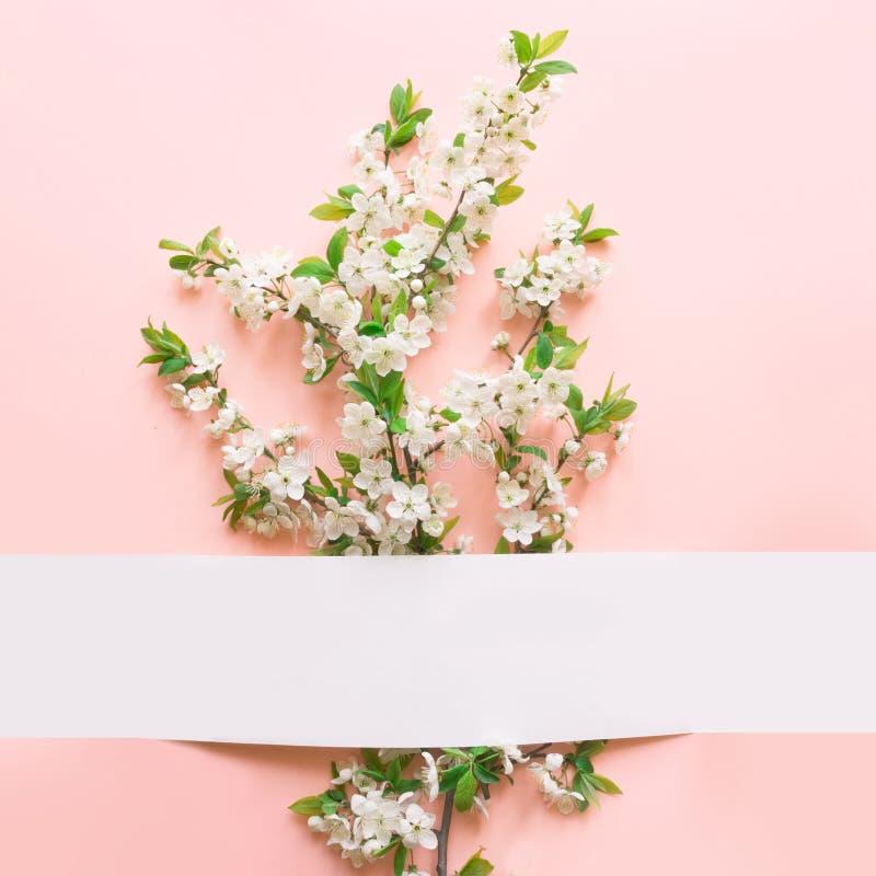 Fond floral de ressort des fleurs blanches de fleur de prune sur le rose Femmes et carte de voeux de vacances du jour de mère Tex photo stock