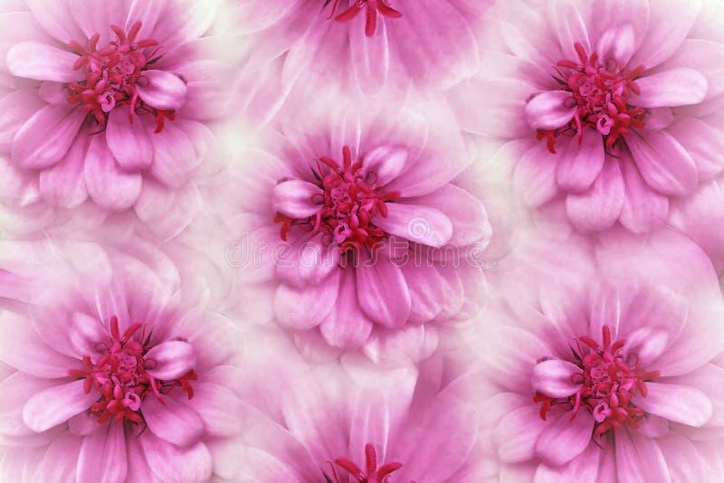 Fond floral de rose d'aquarelle Fleurit des marguerites en gros plan sur un fond rose-clair Fleurit la composition photos libres de droits