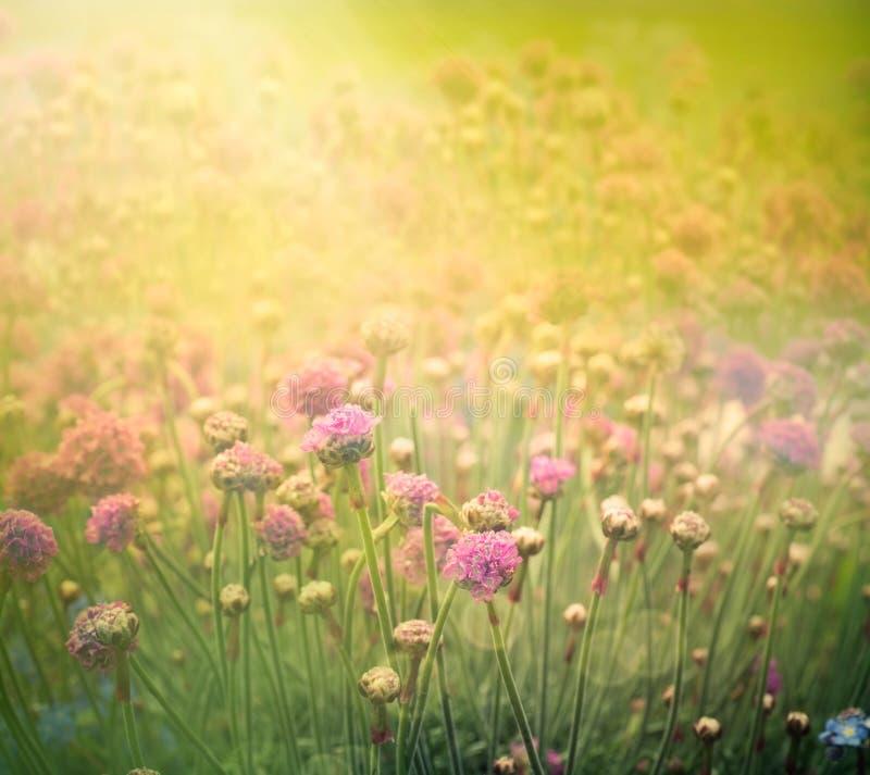 Fond floral de source illustration stock