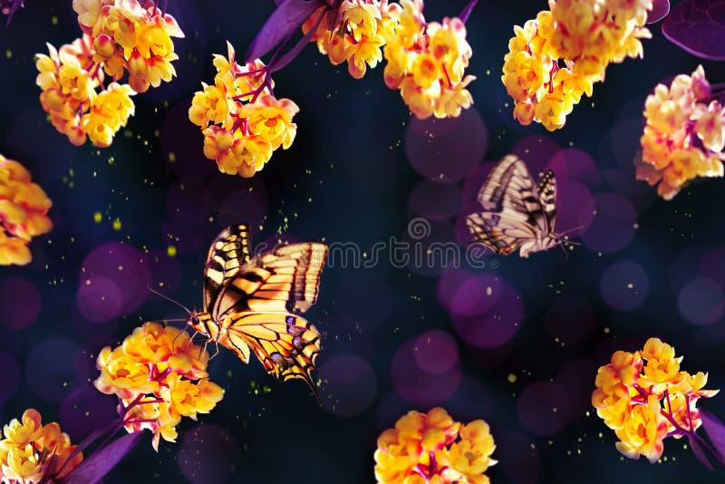 Fond floral de source Beaux fleurs et papillon jaunes sur un fond pourpre et bleu Image artistique d'été de ressort photographie stock libre de droits