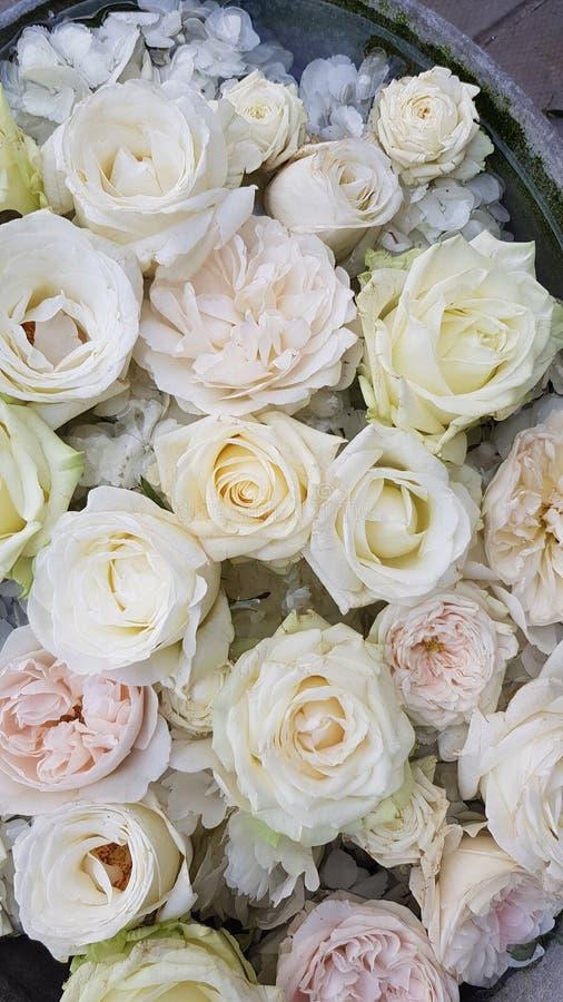 Fond floral Fleurs blanches et bleues Roses blanches et hortensia bleu et blanc Tapis floral Configuration florale Roses blanches photographie stock libre de droits