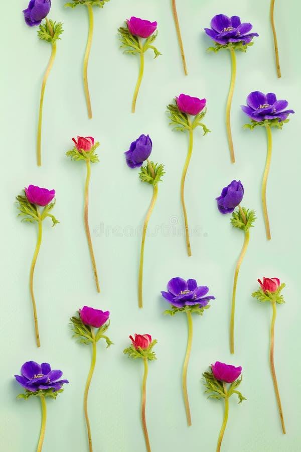 Fond floral Fleurs d'anémone sur le bleu photos stock